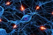 Reprogramacion NeuroEmocional,  mi ...